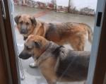 Buster & Douglas